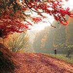 Begin de herfst goed met deze Autumn Deals