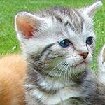 Goedkoop dierenbenodigdheden bestellen voor jouw favoriete viervoeter