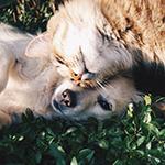Dierendag: verwen jouw huisdier of geniet van dierlijke uitjes