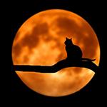 Vier Halloween met extra veel voordeel