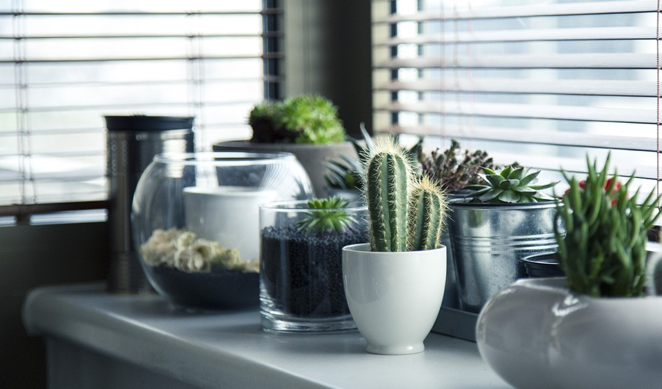 Interieur planten