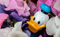 Over Donald Duck