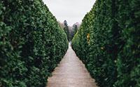 Over Haagplanten Heijnen