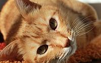 Over Onlinedierenspeciaalzaak