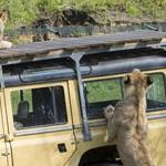 Een dagje ZooParc Overloon kost je nu slechts €8,95 | ActievandeDag
