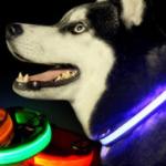 Ontvang nu 80% korting op een hondenhalsband met LED-verlichting | Vouchervandaag