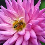 Ontvang een gratis zakje bijenmengsel met de Tuincentrum Koeman kortingscode