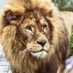Dierenpark Amersfoort korting - bespaar 25% via AD Webwinkel