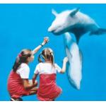 Ontvang bij AD Webwinkel 40% korting op tickets voor Boudewijn Seapark