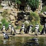 Burgers Zoo korting: bespaar nu 20% op tickets via AD Webwinkel