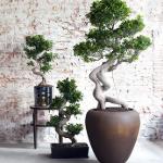 Bestel bij Marktplaats met 55% korting een XL Japanse Bonsaiboom
